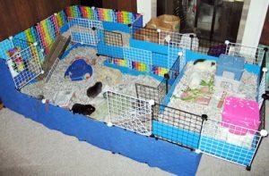 vivienda roedores
